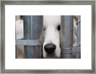 Take Me Framed Print