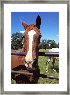Framed Print featuring the photograph Take My Picture Please by Mary M Collins