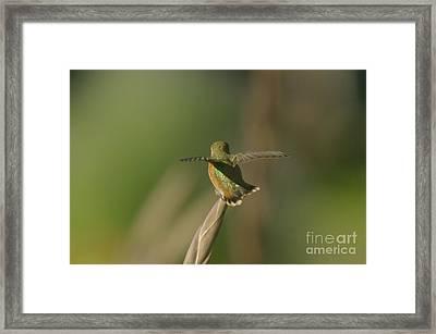 Take Off  Framed Print by Jeff Swan