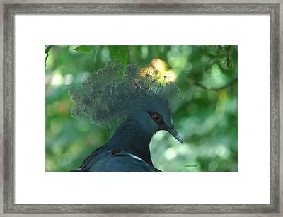 Take The Red Eye Framed Print by Donna Blackhall