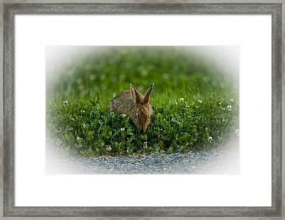 Take Time To Smell The Clover Framed Print
