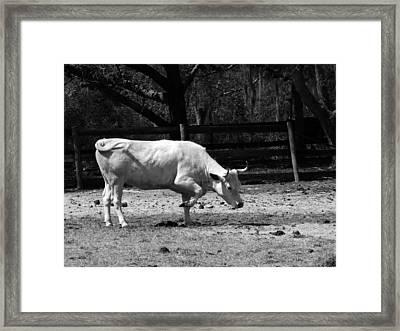 Taking A Bow Framed Print by Pamela Stanford