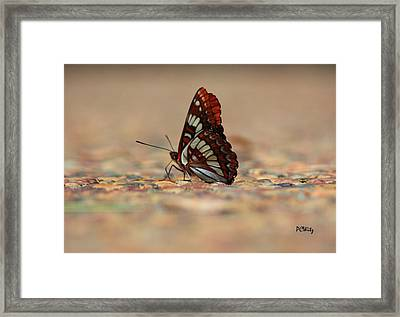 Framed Print featuring the photograph Taking A Breather by Patrick Witz