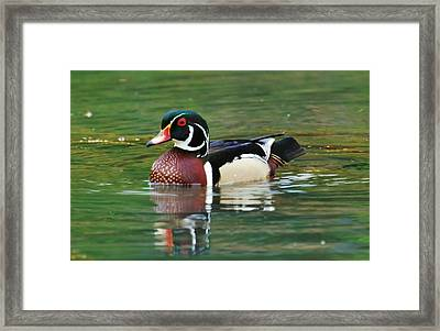 Taking A Swim Framed Print by Charles Covington