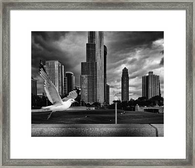 Taking Wing Framed Print by Coby Cooper