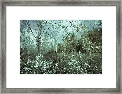 Tale Of The Seasons Framed Print by Akos Kozari