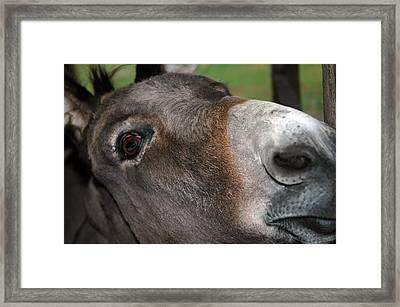 Talking Donkey Framed Print by LeeAnn McLaneGoetz McLaneGoetzStudioLLCcom