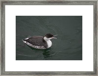 Framed Print featuring the photograph Talking Grebe by Jerry Cahill