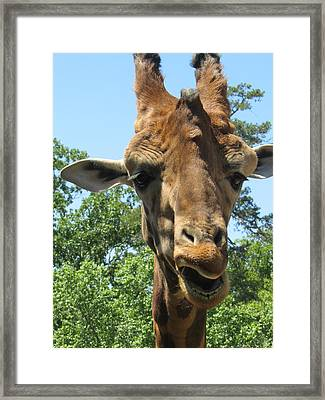 Tall Boy Framed Print by Todd Sherlock