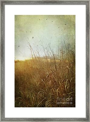 Tall Grass Growing In Late Autumn Framed Print by Sandra Cunningham