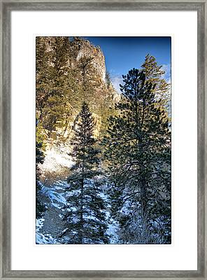 Tall Trees Framed Print by Lisa  Spencer