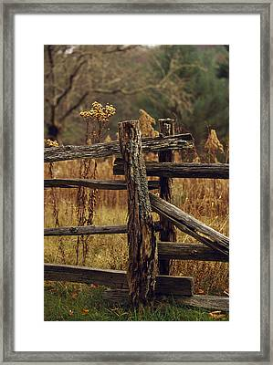 Tall Weeds In Autumn Brown Framed Print by Raymond Gehman