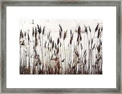 Tall Winter Grass Framed Print