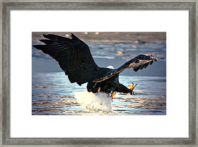 Framed Print featuring the digital art Talons by Carrie OBrien Sibley