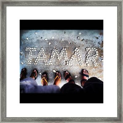 #tamar #turtles #turtlesanctuary Framed Print
