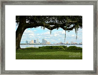 Tampa Skyline Through Old Oak Framed Print by Carol Groenen