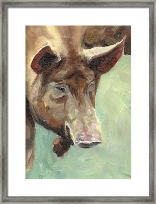 Tamworth Pig Framed Print by Chris Pendleton