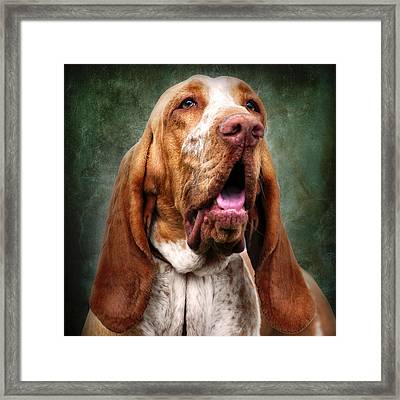 Tan Hound Dog With Long Ears Framed Print