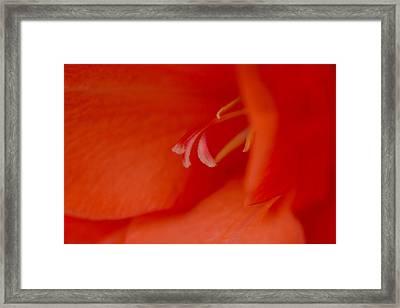 Tangerine Dream Framed Print by William Jobes