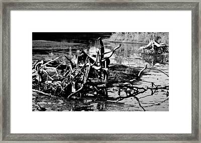 Framed Print featuring the photograph Tangle Wood by Randall  Cogle