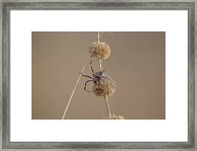 Tangled  Framed Print by Melissa  Maderos