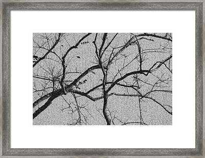 Tangled Mosaic Framed Print by Elizabeth  Doran