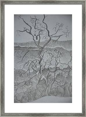 Tangled Tree Of A Lonely Mind Framed Print