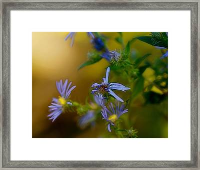 Tangled Up In Blue Framed Print by Susan Capuano