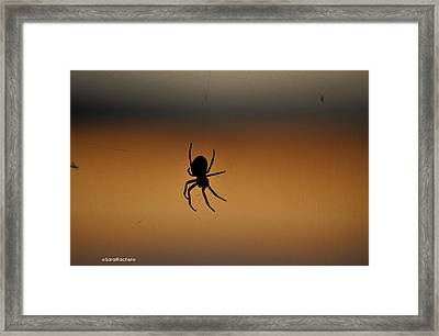 Tangled Web Framed Print by Sarai Rachel