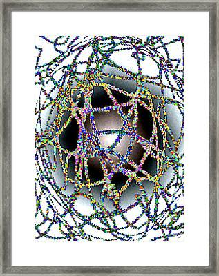 Tangled Web Framed Print by Will Borden