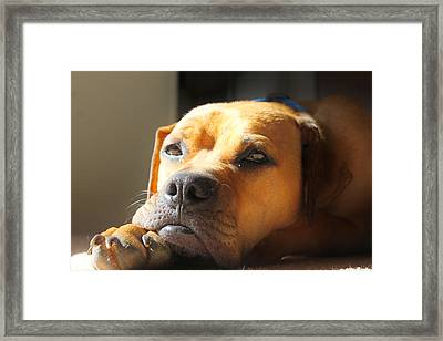 Tanning Framed Print by Rebecca Frank