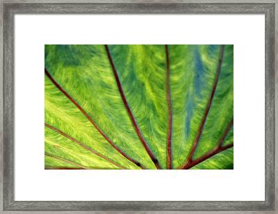 Taro 1 Framed Print
