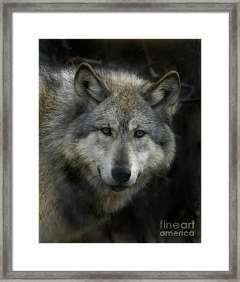 Tashina  Beauty Of The Mountain Framed Print