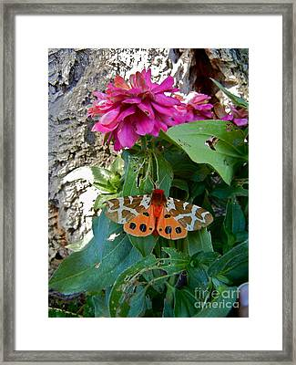 Tasteful Tiger Framed Print by KD Johnson