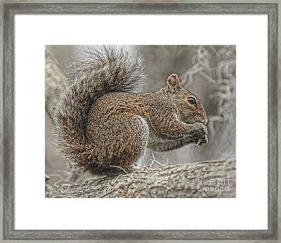 Tasty Tidbits Framed Print by Deborah Benoit