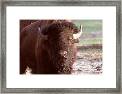 Tatonka Framed Print by Artist Orange