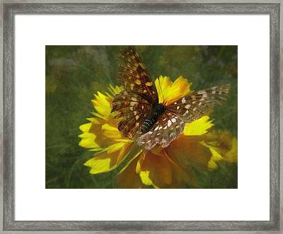 Tattered Wings Framed Print by Cindy Wright