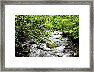Tea Creek Framed Print by Thomas R Fletcher