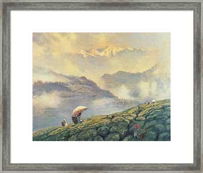 Tea Picking - Darjeeling - India Framed Print by Tim Scott Bolton