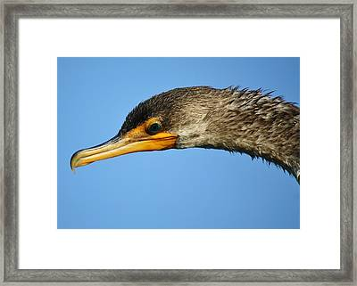 Teal Eyes Framed Print by Paulette Thomas