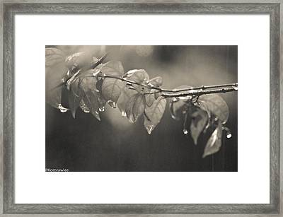Tears From Heaven  Framed Print
