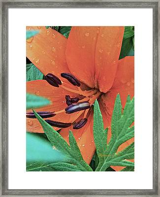Tears II Framed Print by Rotaunja