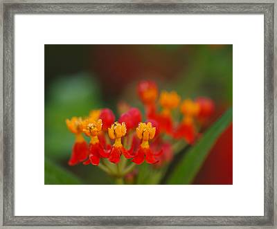 Tears Of Morning Framed Print