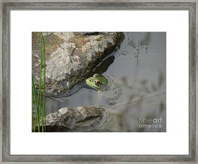 Ted The Toad Framed Print by Linda Seacord