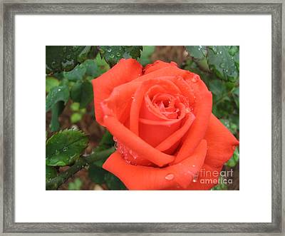 Framed Print featuring the photograph Tee Sip by Mark Robbins