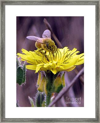 Framed Print featuring the photograph Teeny Tiny by Leslie Hunziker