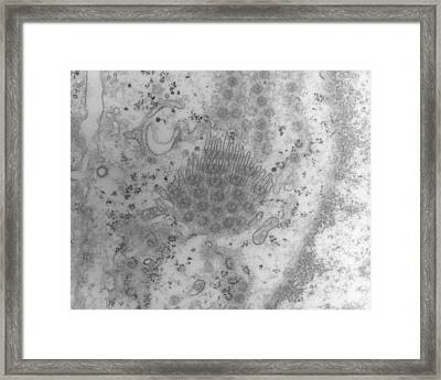 Tem Of A Cell Nucleus Membrane Showing Pores Framed Print by Dr Kari Lounatmaa