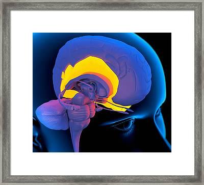 Temporal Lobe In The Brain, Artwork Framed Print by Roger Harris