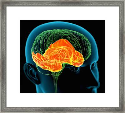 Temporal Lobes In The Brain, Artwork Framed Print by Roger Harris
