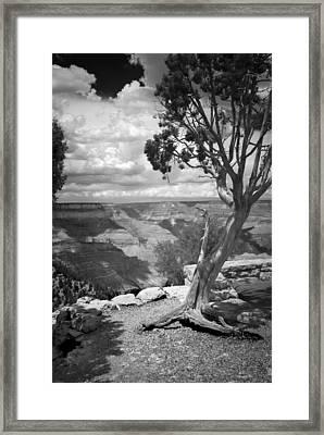 Tenacity Black And White Framed Print by Cindy Rubin